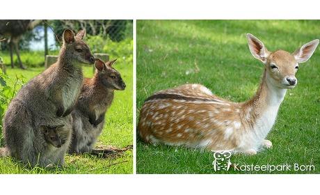 Wowdeal: 2 Entreekaarten voor Kasteelpark Born