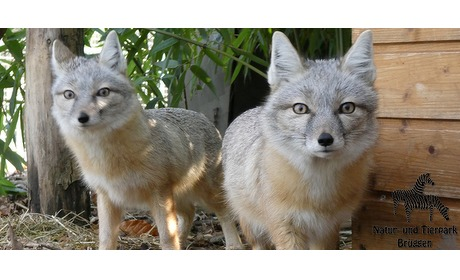 Wowdeal: Entreeticket bij Natur- und Tierpark Bruggen