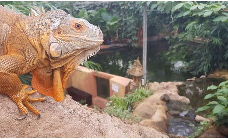 Groupon: Entree dierenpark Almere Jungle
