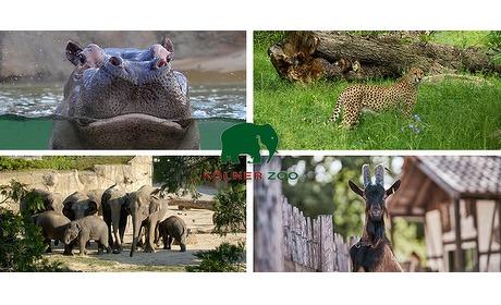 Wowdeal: Entree voor Kolner Zoo en aquarium
