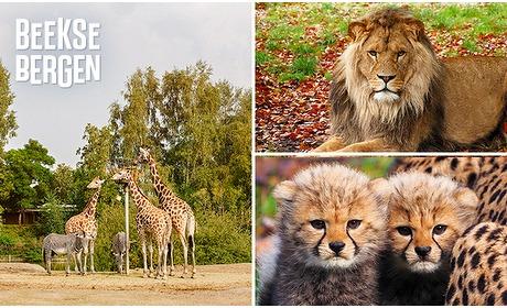 Social Deal: Entree Safaripark Beekse Bergen + warme drank