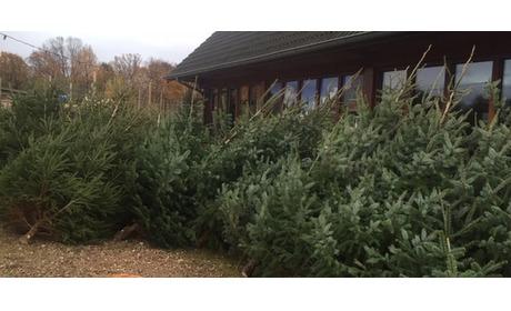 Wowdeal: Kerstboom bij Break Out