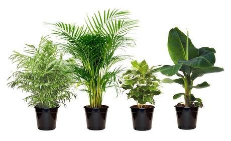 Groupon: Kamerplanten