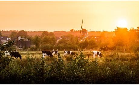Groupon: Natuur in Twente: 2-persoonskamer, naar keuze incl. ontbijt