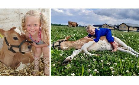 Wowdeal: Workshop koe knuffelen en toegang buitenspeeltuin bij Boebadoefarm