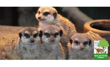 Wowdeal: Weer geopend: entreeticket bij Natur- und Tierpark Brueggen