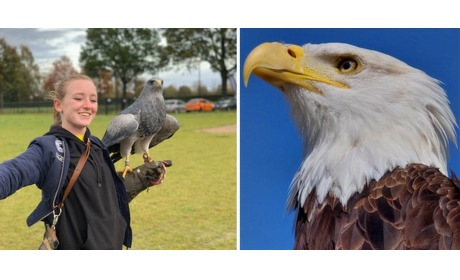 Wowdeal: Roofvogelworkshop bij Falconcrest